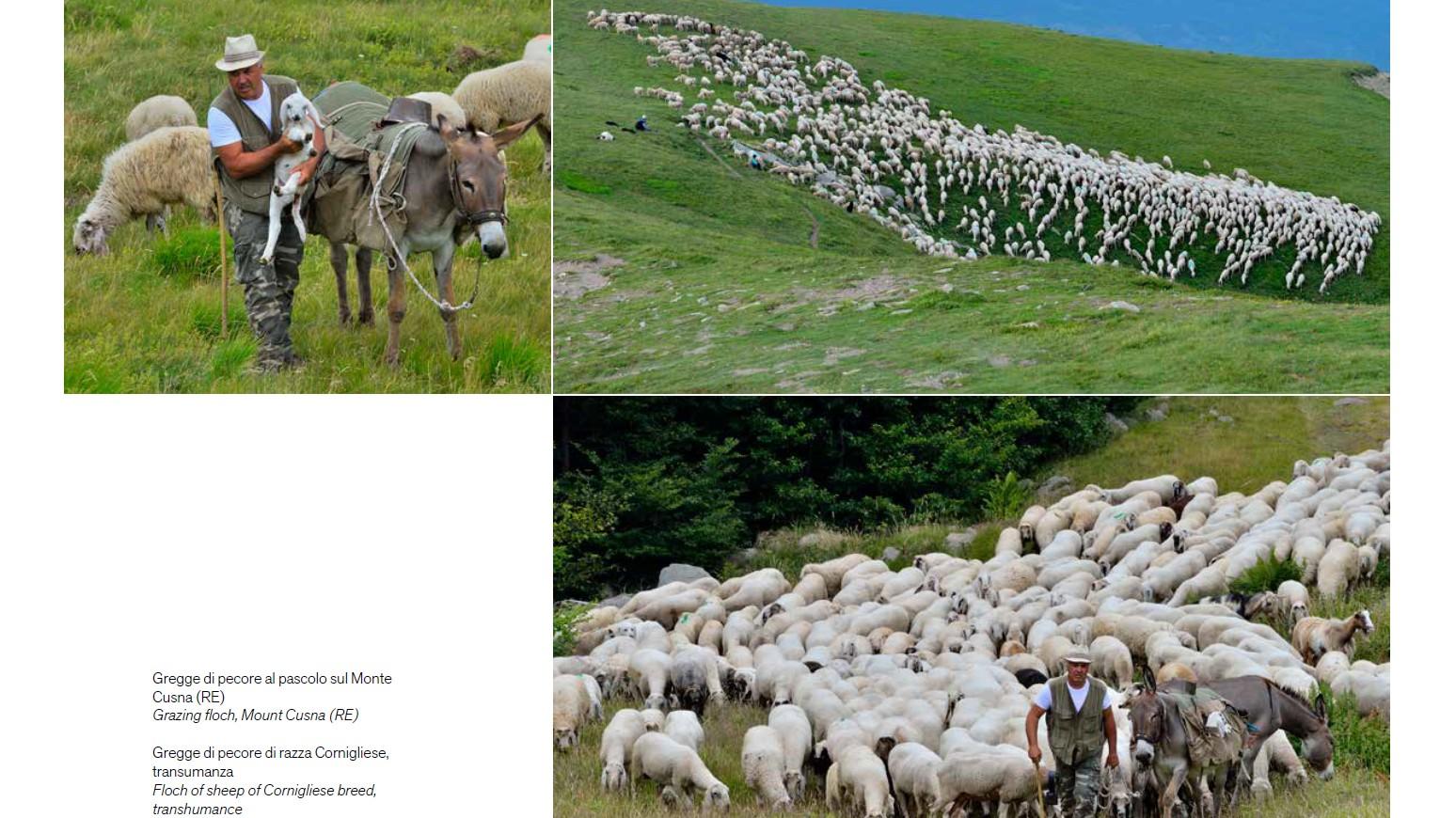 https://www.lucianocremascoli.com/fotosito/wp-content/uploads/2020/07/16.jpg